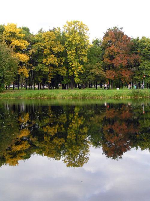 Деревья на воде