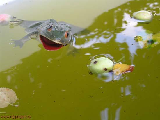 Лягушка в яблоках