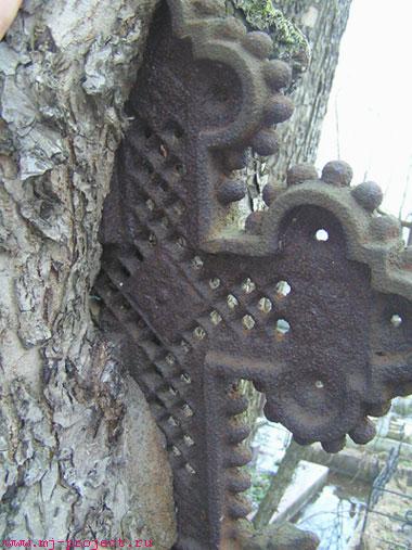 Крест врос в дерево