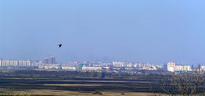 Ворона на фоне города