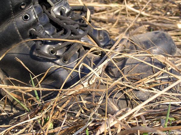 Пыльные ботинки и солома